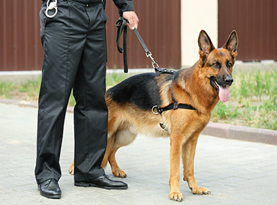 MN Supreme Court Rules Drug-sniffing Dog Outside an Apartment Not a Search